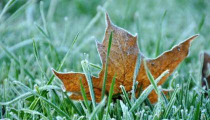 frosty-lawn-420×240