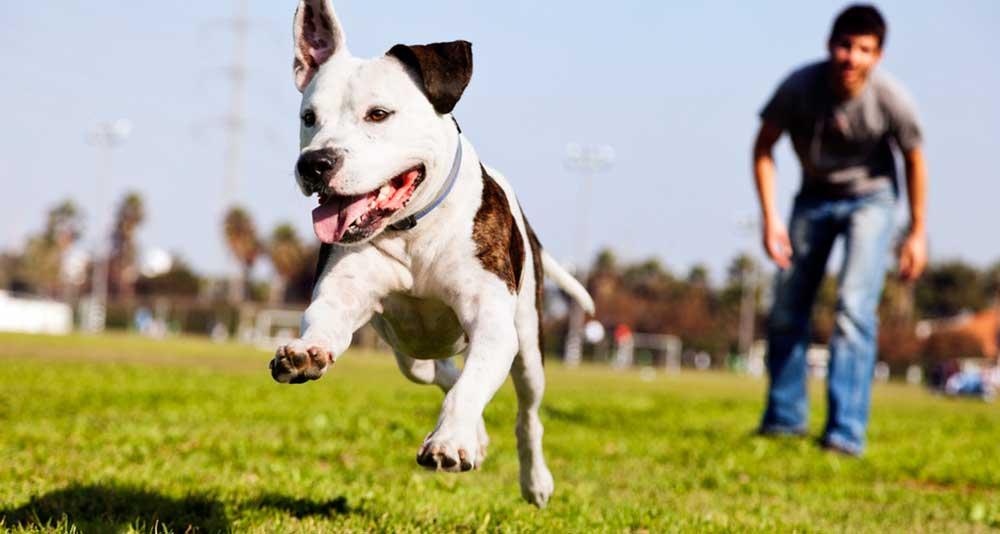 dog-playing