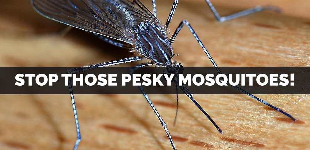 stop-those-pesky-mosquitoes