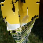 bag_a_bug-150x150 Saving Your Lawn from Grubs