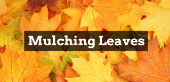 Don't Rake Those Leaves, Mulch Them!