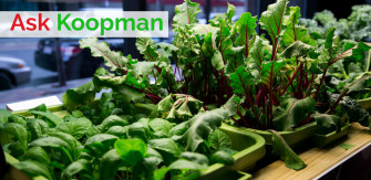 Ask Koopman: Starting From Seeds