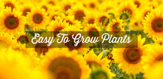 Easy To Grow Flowers & Plants for Beginners and Children