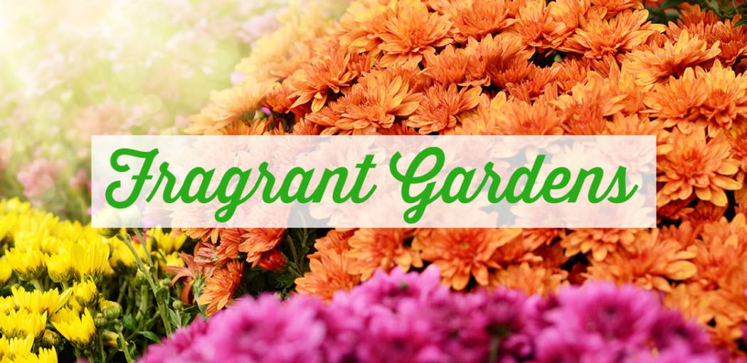 Fragrant-gardens-tips-koopman-lumber