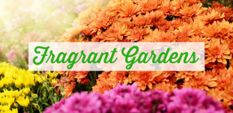 Fill Your Garden With Fragrant Flowers