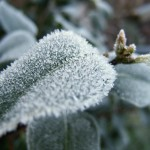 How To Protect Your Spring Plants heavy frost