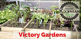 Growing Your Own Produce: The Heritage of Victory Gardens