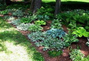 Shade Garden example 2