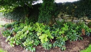 Shade Garden example 1