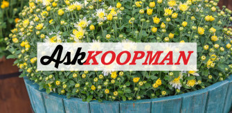 Ask Koopman: Soil For Your Container Plants