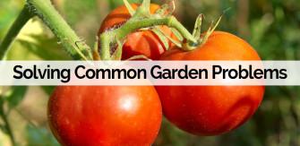 Garden Problem-Solving