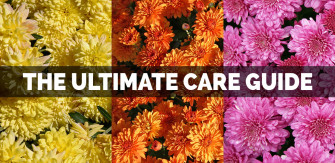The Ultimate Care Guide for Mums