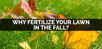 Fall Lawn Feeding – Why Fertilize Your Lawn in the Fall?