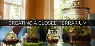 Creating a Closed Terrarium