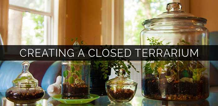 creating-a-closed-terrarium
