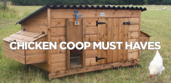 Chicken Coop Must Haves