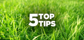 5 Top Fall Lawn Seeding and Overseeding Tips