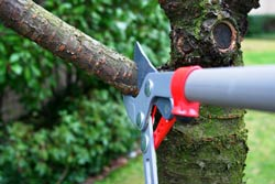 trimming-and-pruning-branches