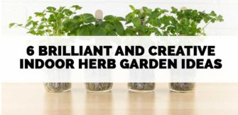 6 Brilliant and Creative Indoor Herb Garden Ideas
