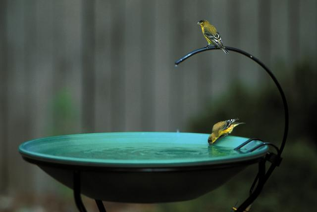 birds on a bubbling water fountain