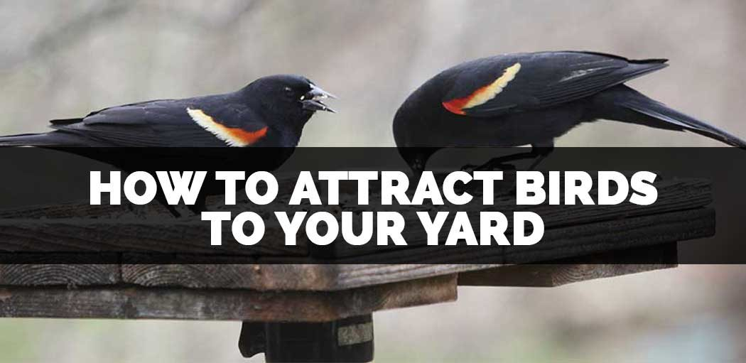 how-to-sttract-birds-to-your-yard-and-get-rid-of-squirrels