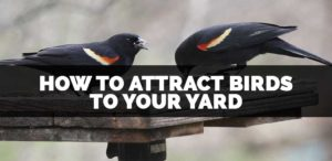 how to attract birds to your yard and get rid of squirrels