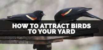 How to Attract Birds To Your Yard (and Get Rid of Squirrels)