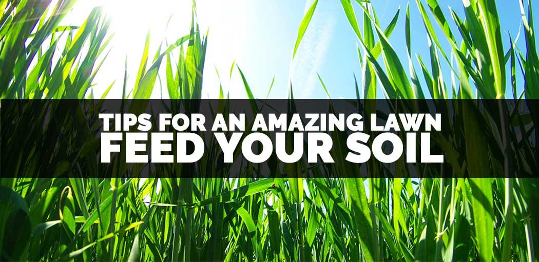 Tips-for-an-amazing-lawn-feed-your-soil