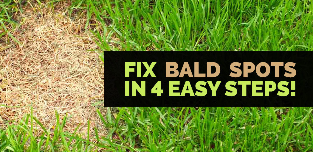 fixing-bald-spots-on-your-lawn