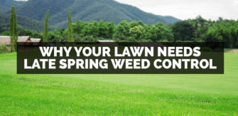 Why Your Lawn Needs Late Spring Weed Control