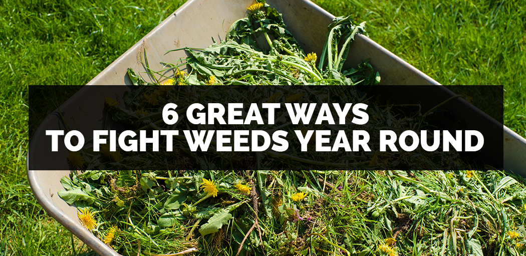 6-great-ways-to-fight-weeds-all-year-long