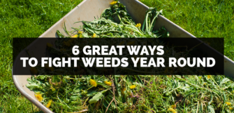 6 Great Way To Fight Weeds Year Round
