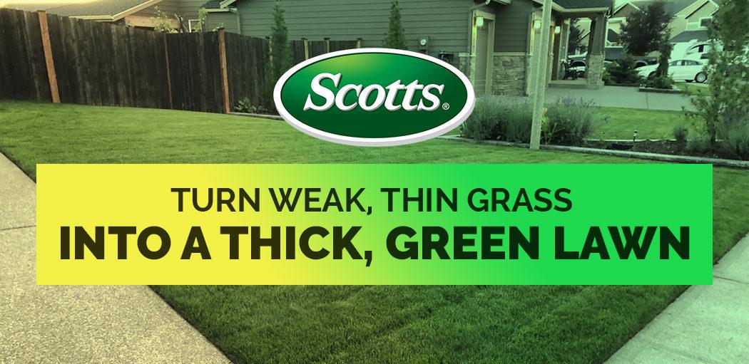Scotts-thick'r-lawn