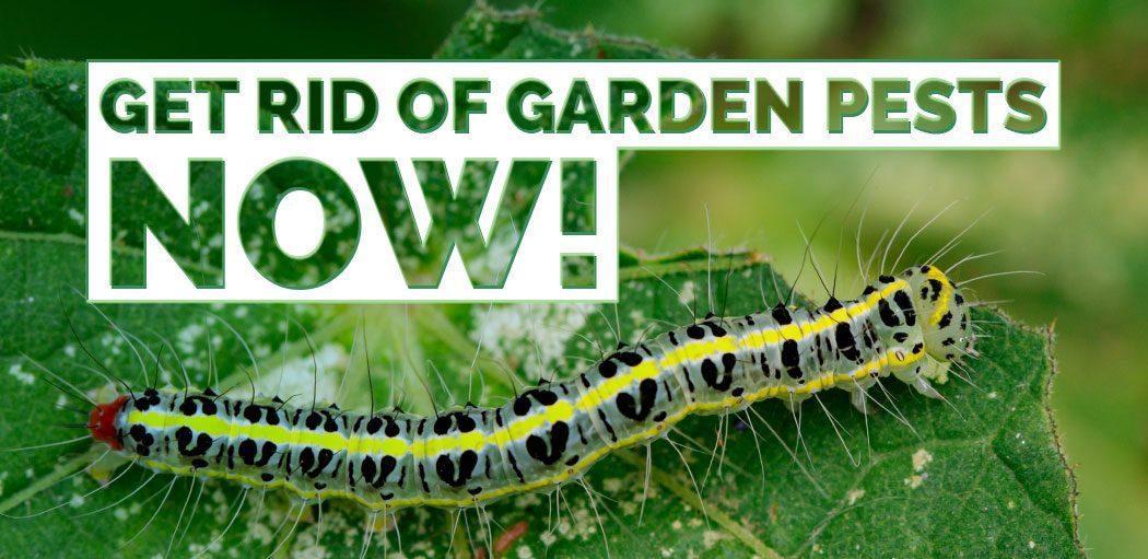 Get-rid-of-Garden-Pests-Now