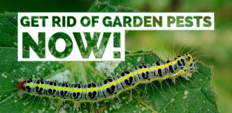 Get Rid of Garden Pests NOW!